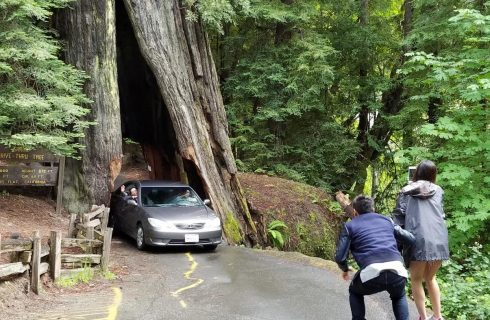 person in blue jacket photographing car driving through huge base of redwood tree