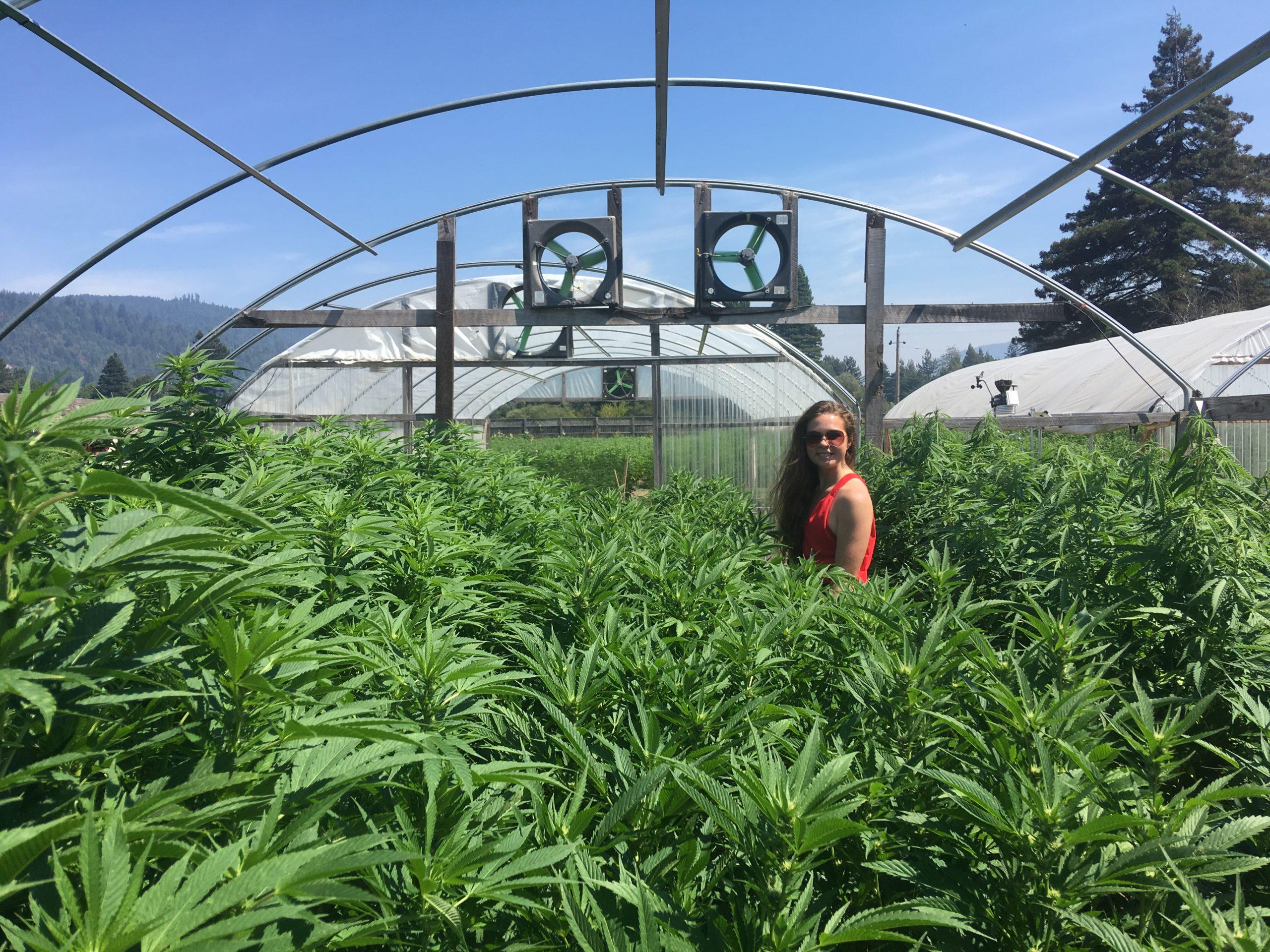 A woman touring a cannabis farm in Fortuna CA