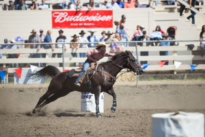 Barrel racer riding brown horse in arena with crowd behind white fence and on bleachers. Red Budweiser banner in bleachers.