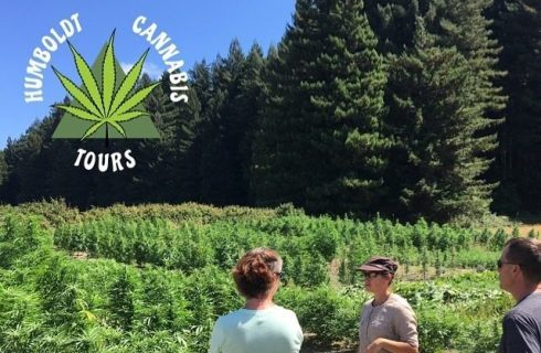 Three people looking at a green field of cannabis plants