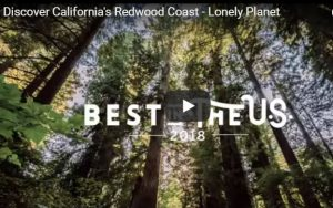 View looking up at redwood canopy and blue sky Discover California's Redwood Coast – Lonely Planet Best of US 2018