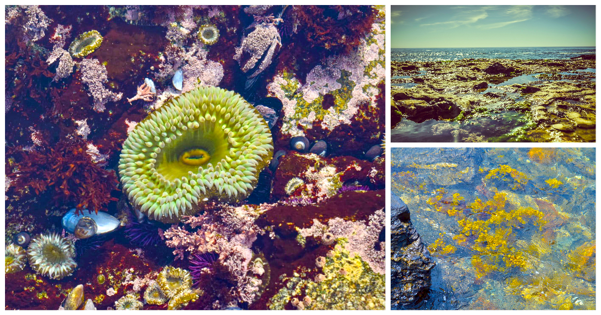 Tide pool examples
