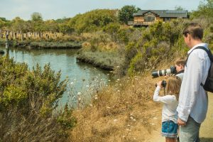 man standing next to boy and girl using camera & binoculars to watch along shore path with marsh grasses and water on left