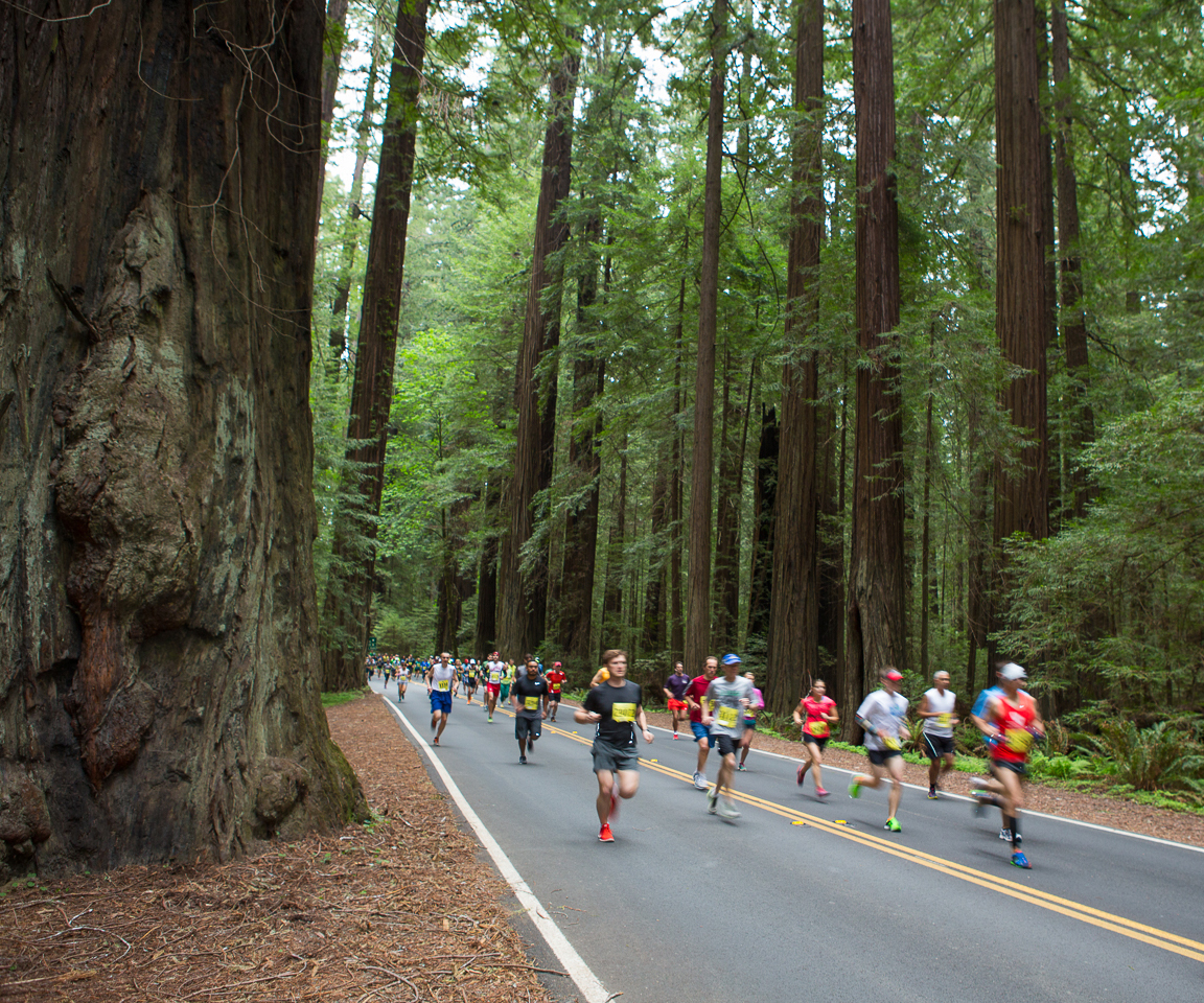 Colorfully dressed runners racing down Avenue of the Giants under canopy of towering redwood trees with brown trunks and green foliage