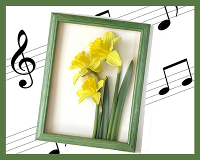 Three yellow daffodils with leaves in green frame superimposed on green-framed musical staff and notes