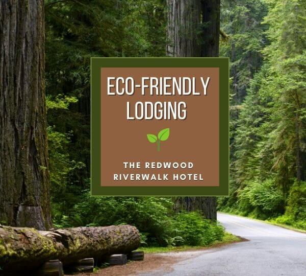 Giant Redwoods in the forest with text : Eco-Friendly Lodging, The Redwood Riverwalk Hotel