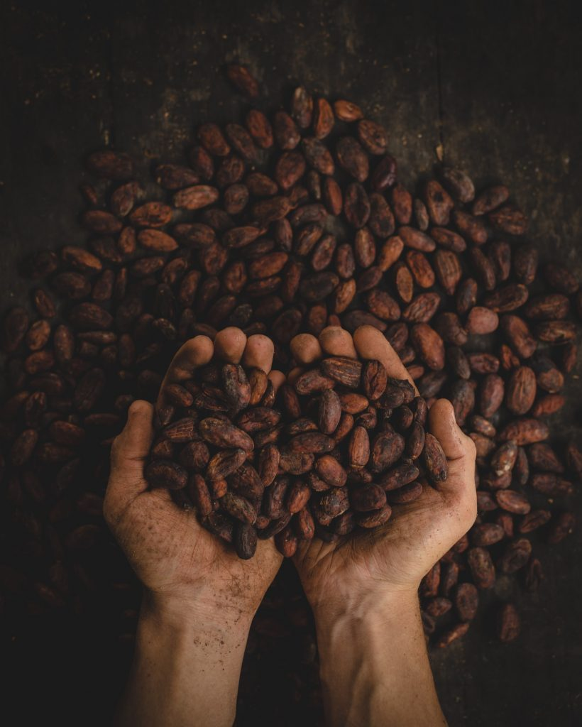 two palms up hands holding cacao beans against background of many brown cacao beans