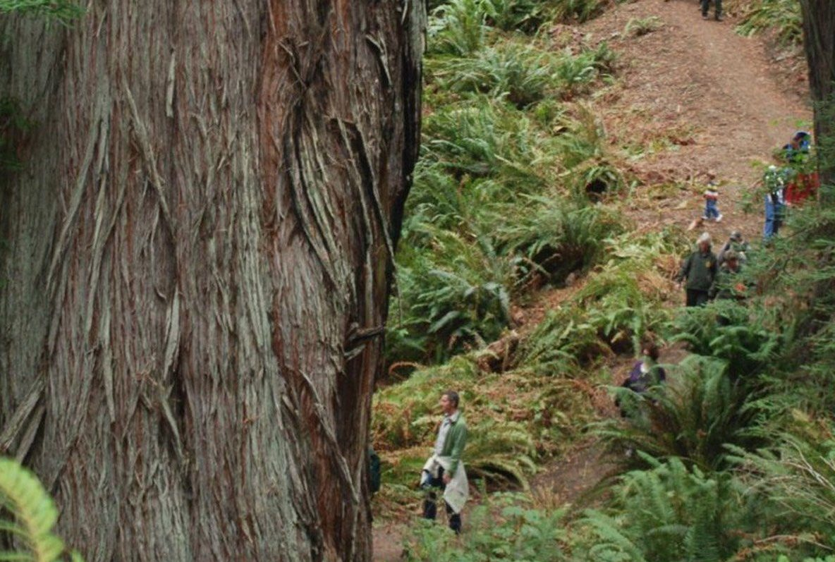 hiking trail with huge redwood tree trunk in left foreground